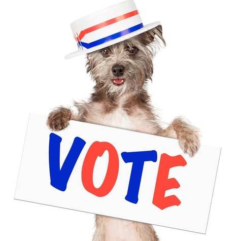 Dog-with-vote-sign_084135